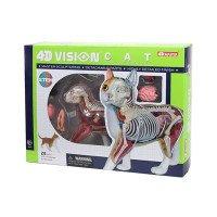 Объемная анатомическая модель 4D Master Кот рыжий табби