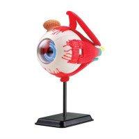 Набор для исследований Модель глазного яблока сборная, 14 см, Edu-Toys